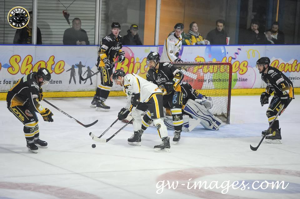 Wild Share Spoils With Lions